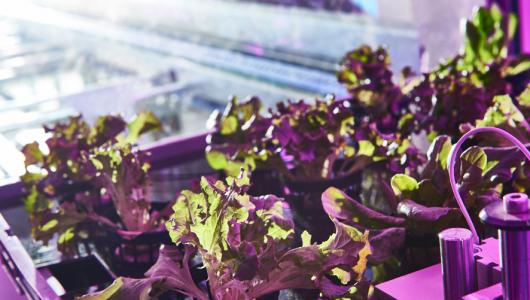 Urban Crop Solutions