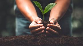 basisbeeld Mastering Sustainable Transformation AMS