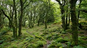 foto van een bos