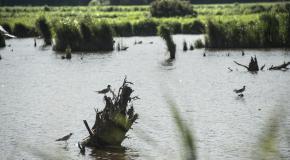 natuurgebied met water